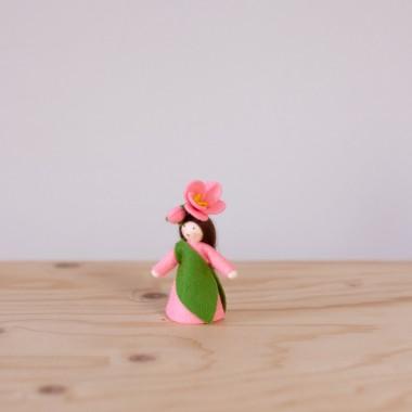 Camellia japonica fairy