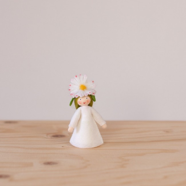 The common daisy fairy